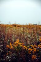The Begining of Fall by jeffreyverity