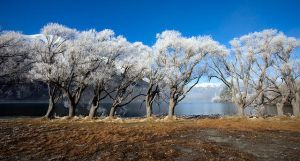 Hoarfrost by benyoung