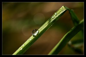 After Rain by ExSLR