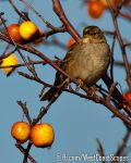 Bird and Apples by IvanAndreevich