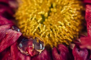 Flower close-up testing extension tubes by TheSoftCollision