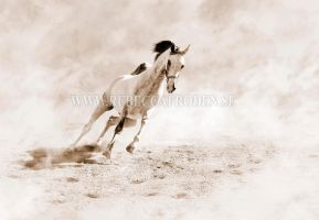 Wild stallion by DoodlebugBandit