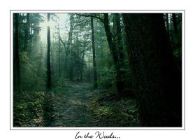 in the woods... by IsaFortyThirty1