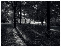 Light - Shadow In Park by BloodAddict