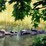 Turtles Hanging Out by LDFranklin