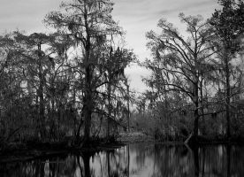 Dark Louisiana Swamp by SalemCat