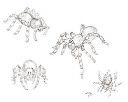 spiders............. xD by ifu-chan