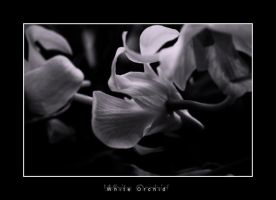 White Orchid by UntamedUnwanted