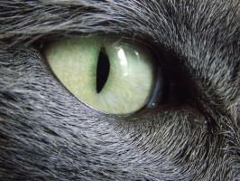 My cats eye by MunsenTheBiscuit69