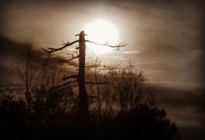 Dead Tree by PascalsPhotography