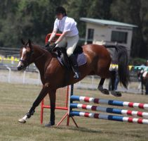 STOCK Showjumping 429 by aussiegal7