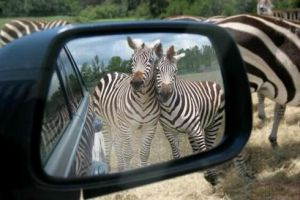 Strsp in my reer view mirrors by photographiclove162