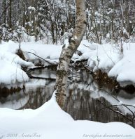 SPRING SNOW REFLECTIONS by 1arcticfox