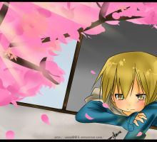 DRRR:Cherry Blossoms by Abhie008