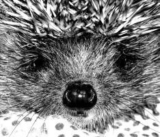 A Hedgehog by JoxiCingiLingi