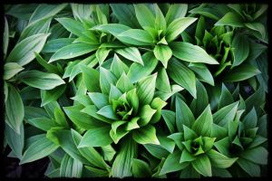 green shapes by miss-gardener