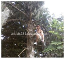 Climbing Trees 4101109 by anubis281