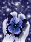 Butterfly by cica99