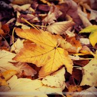 autumn leaves by l-CoRaLiNe-l
