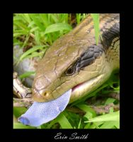 Blue Tongue by engridearty