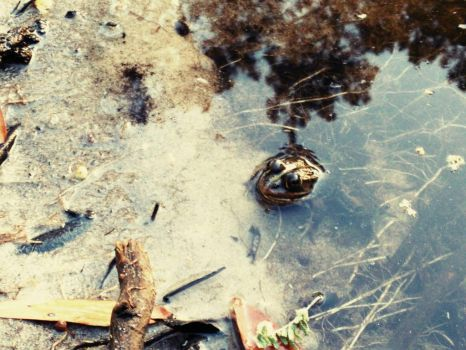Just another frog by Vortumnus