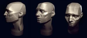 Planes of the head study by VertexBee