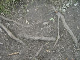 Roots And Dirt by Stoo-stock