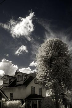 Infrared Monkey Tree by Hxes