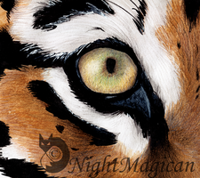 Eye of the Tiger by NightMagican