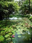 Lily Pond by WillTC