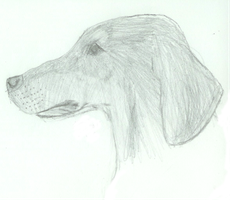 Dachund Profile by Nahorse