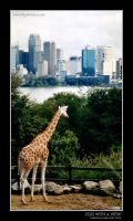 Zoo with a View by bigshotdan