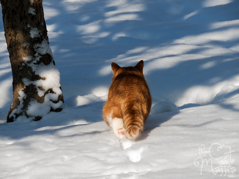 BRB - I just saw a bird! by RavenMontoya