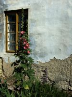 Window and a flower by aktron