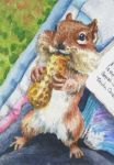 Jocelyne's Chipmunk, ATC by waughtercolors