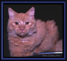 Ginger In The Darkness by LANDRUMCREATIONS