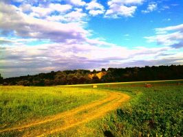 Field road by Werchik