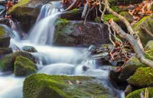 Forest River by ferrohanc