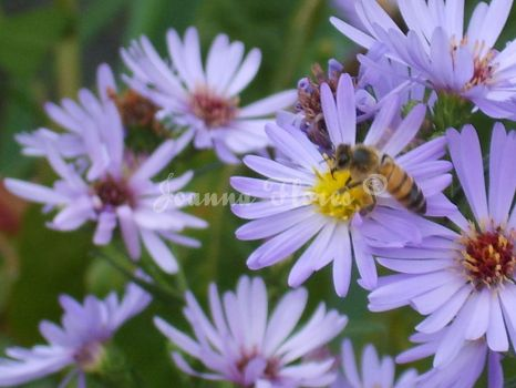Chasing the Bee Series: II by Sheila-Non-Virginale