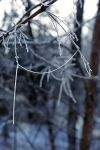 frosty morning 4 by LucieG-Stock
