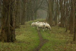 Sheep on the dike 2 by steppelandstock