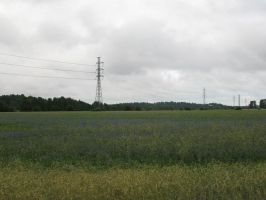 Field with electricity cables by Minnake