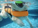 Service Dog At The Pool XI by LDFranklin