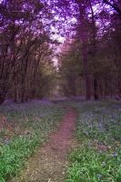 Bluebell Woods Stock 17 by Sassy-Stock