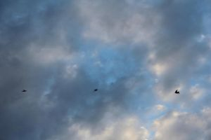 swallows and clouds *-* by handschufachxD