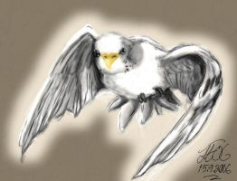 Budgie by Demondes