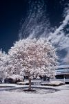 Sugar Coated - infrared by ilimel