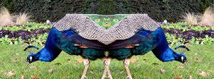 The Holland Park Pushmi-Pullyu Peacock by aegiandyad