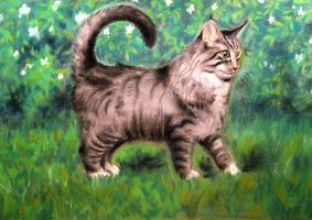 Cat on the grass by Scientist-2002-1