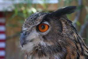 Look into my eye: Full-size by greenwalled1
